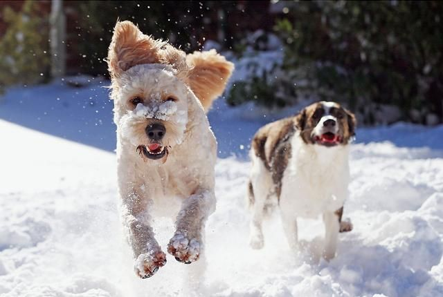 "I don't live in snow country so this advice from Mental Floss isn't useful to me....but aren't the dogs joyous? ""It's easy to become a savvy consumer of snow predictions with a little bit of knowledge—and a healthy dose of skepticism."""