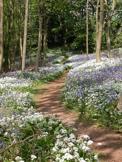 Woodland Path - Longwood, Somerset, UK.