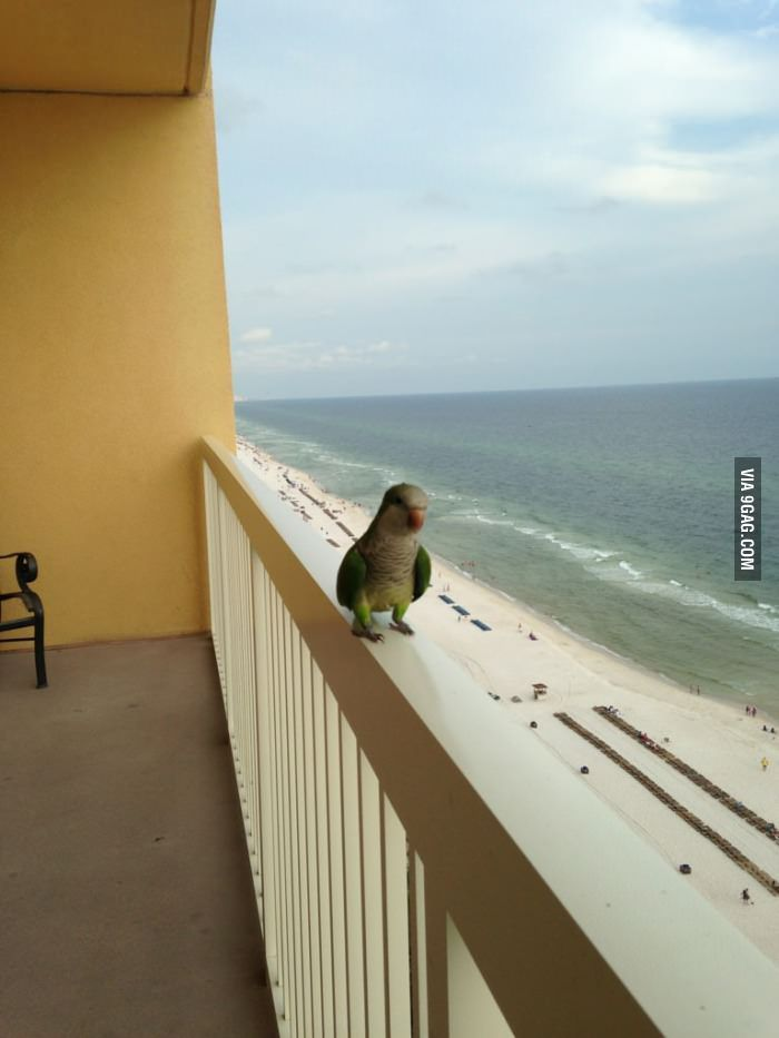 This Little Guy Comes To Visit Every Day At Our Condo In