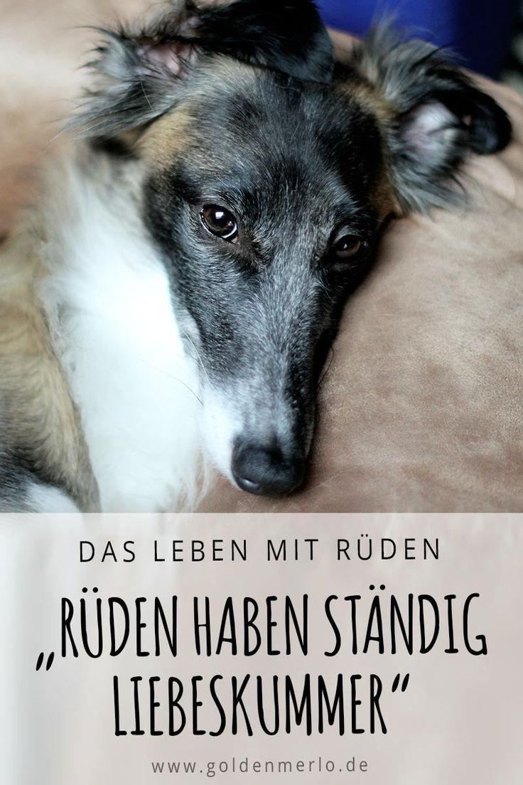 Ruden Leiden Standig Unter Liebeskummer Ist Ein Haufiges Vorurteil Und Grund Lieber Gleich Eine Hundin Zu Kaufen Doch Sti Hunde Hundeverhalten Hundehaltung