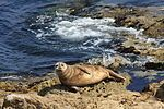17-Mile Drive - Wikipedia, the free encyclopedia