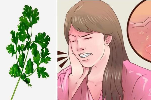 El perejil es el alimento ideal para calmar ese terrible dolor de muelas. Cuando tenemos un dolor de muela es como si estuviéramos viviendo una de las peores pesadillas. Los dolores de muela son provocados por infecciones y caries dentales. El dolor de muelas es considerado como uno de lo más intensos que pueda tener …