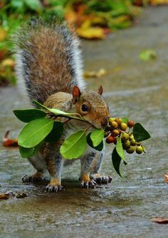 Gardening ideas for the upcoming fall season