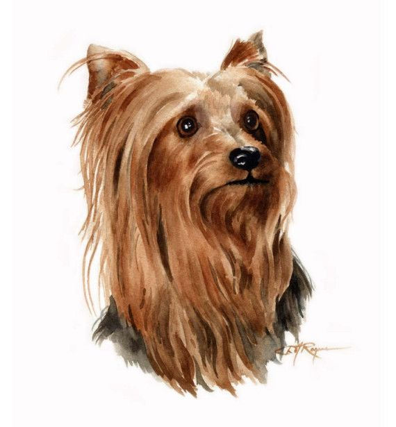 Yorkshire Terrier print by David J. Rogers on Etsy...looks like Judith's Cricket