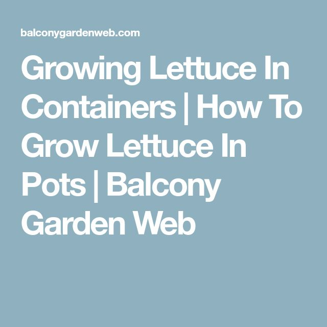 how to grow romaine lettuce in containers