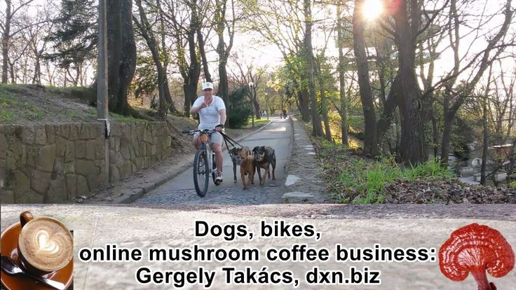 Apartment-dog dad and coffee MLM business hated by most people: why DXN?