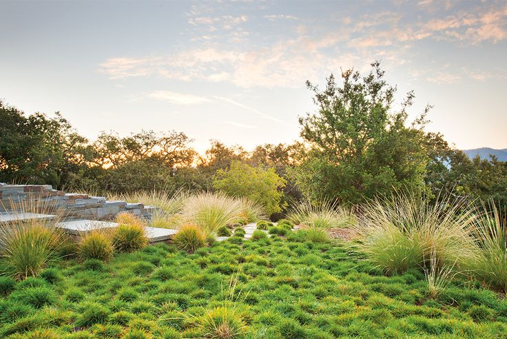 """Tufts of hardy June grass and sesleria """"Greenlee"""" were planted in a random manner to soften the rugged landscape."""