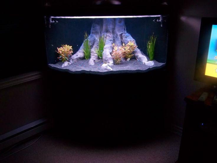 17 best images about fish tank ideas on pinterest for Aquarium decoration sealant