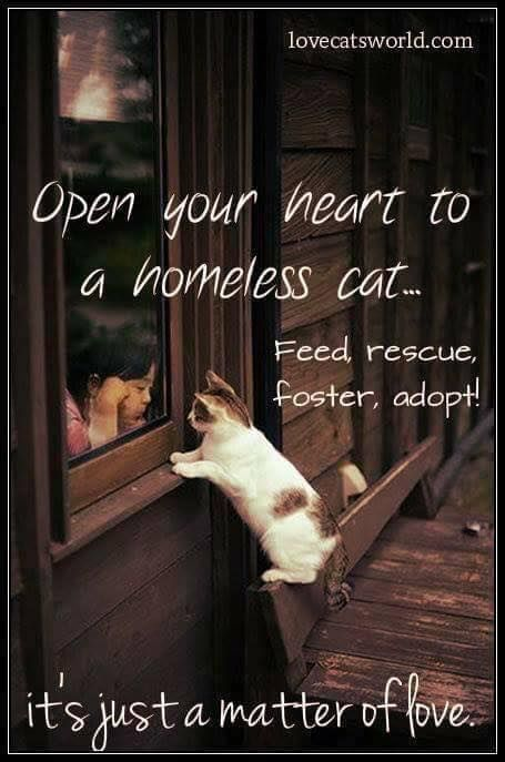 Adopt a animal in a shelter. They need a deserve love and good homes too.