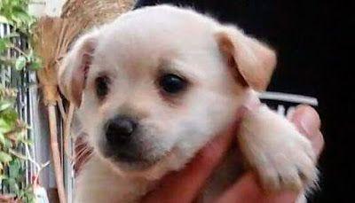 CACHORROS EN ADOPCIÓN: 5 cachorros para adoptar en Alicante