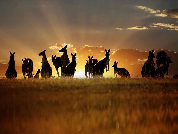 Kangaroo Moment