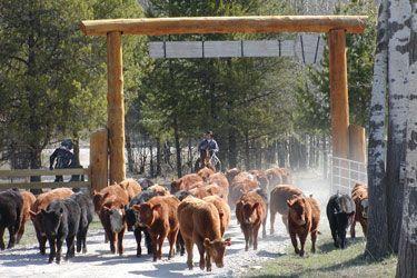 Séjour équestre en ranch éthologique dans le Nord du Montana aux USA - Un voyage Rando Cheval - http://www.randocheval.com/Programmes/ch138-ranch-nord-montana.htm