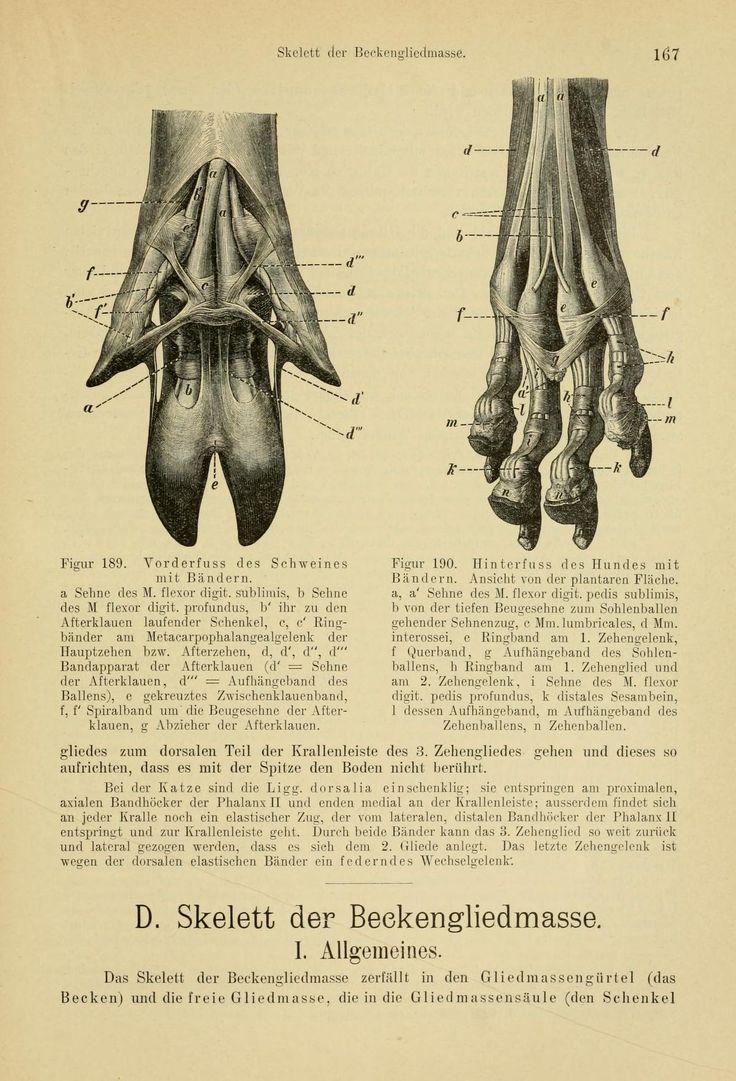 76 best Animal Anatomy images on Pinterest | Animal anatomy, Anatomy ...