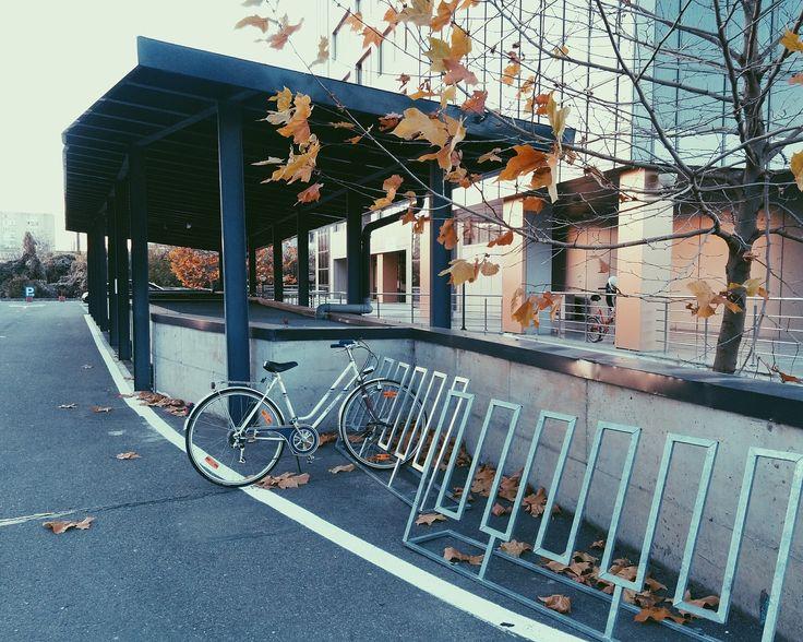 Bike days - © Dana Cristea  Instagram: https://www.instagram.com/p/BNE7WltBUDC/?taken-by=danaaacristea