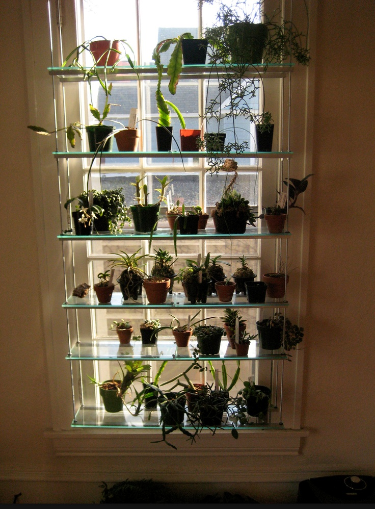 Window Shelving For Orchids Ikea Hackers Pinterest