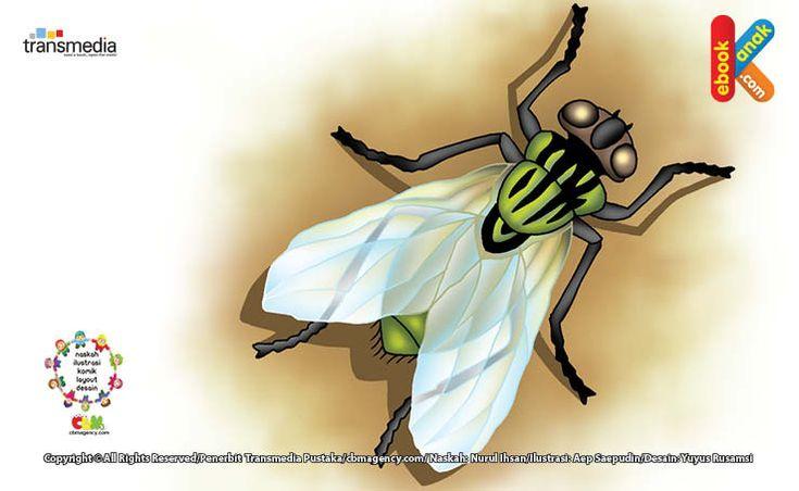Lalat, Serangga Berusia Terpendek di Dunia