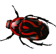 Bugs PNG Images On this site you can download free Bugs PNG image with transparent background.