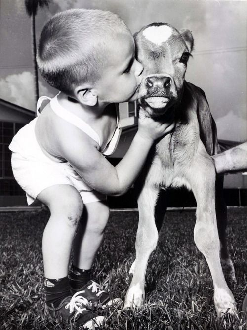 Aw babies & cows - 2 of my favorite things!