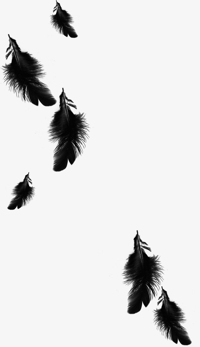 Black Feather Feather Beautiful Feathers Floating Feather Png Image Dark Black Wallpaper Black Aesthetic Wallpaper Photo Editing Lightroom