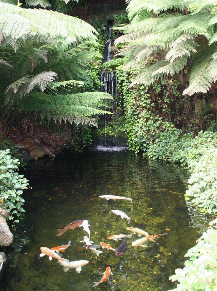 Koi Pond..love the ferns! I want a backyard jungle