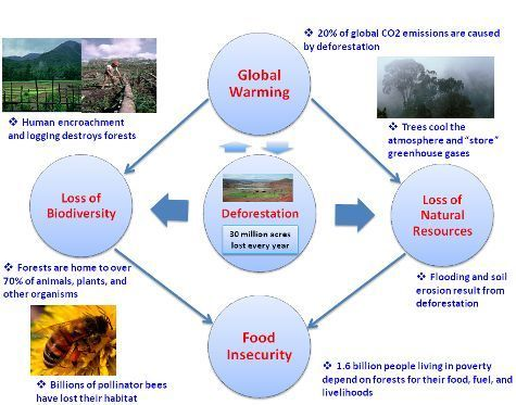 the importance of rain forest and results of its destruction There are three important reasons for the world's failure to protect the remaining rainforest: increasing demand for products leading to deforestation, fragmentation of intact and primary forests, and finance flows leading to deforestation.