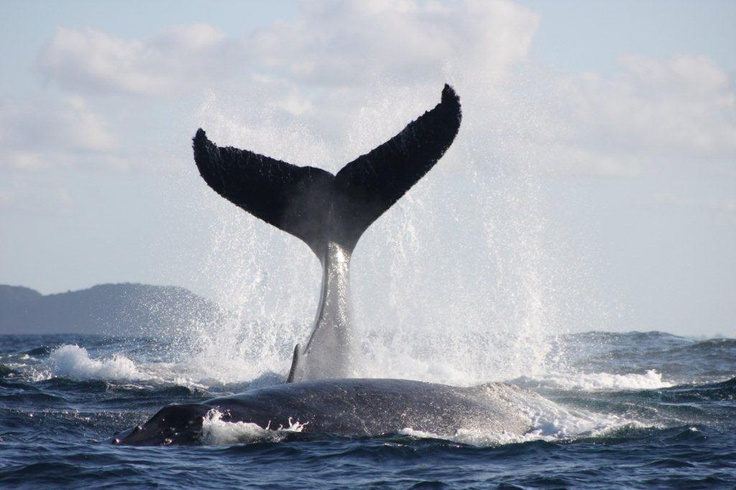 Ocean Experience Whale watching St Lucia iSimangaliso Wetland pak