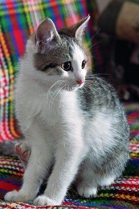 cat happy meow