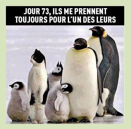 Le chat élevé par des pingouins