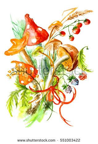 Bunch of mushrooms, berries, plants, herbs, over white background. Figure executed in watercolor. Russula, chanterelle, mushrooms and other fungi