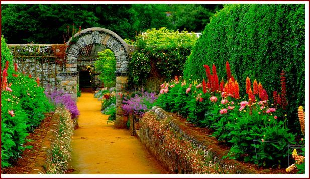 beautiful garden and lawn