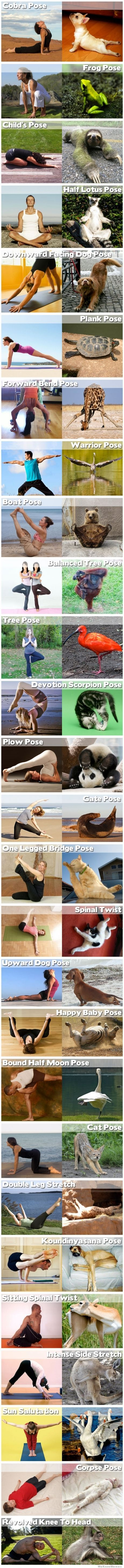animals-doing-yoga-poses-if they can - I can!!