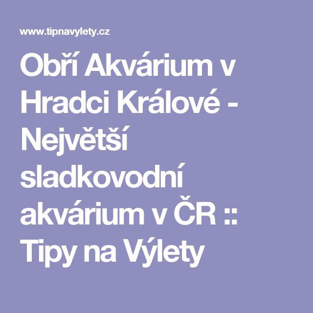 Obří Akvárium v Hradci Králové - Největší sladkovodní akvárium v ČR :: Tipy na Výlety