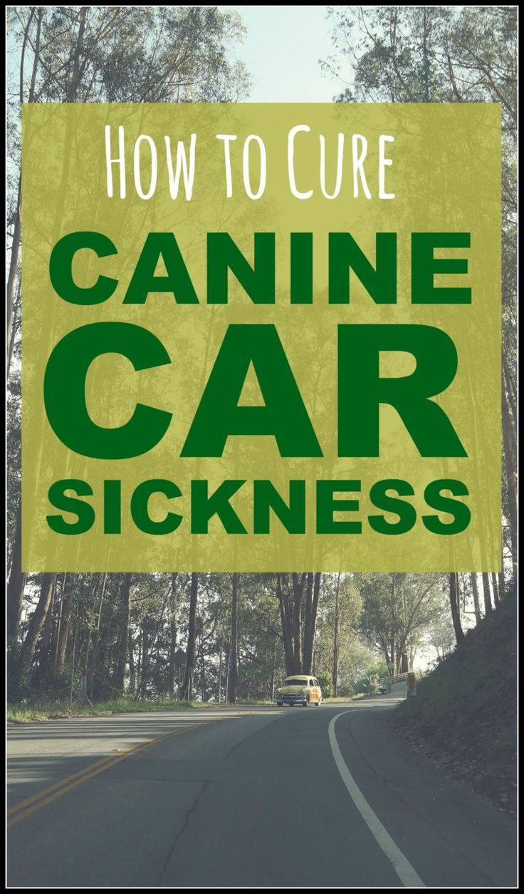 There's nothing worse than when your dog gets ill in the car. However there are…