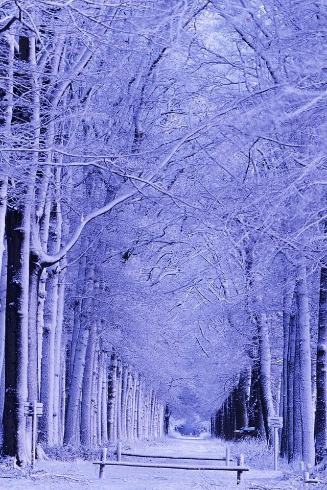 <3 Snowy | Landscapes