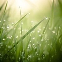 Morning Dew by Khoirunisa Dhea on SoundCloud