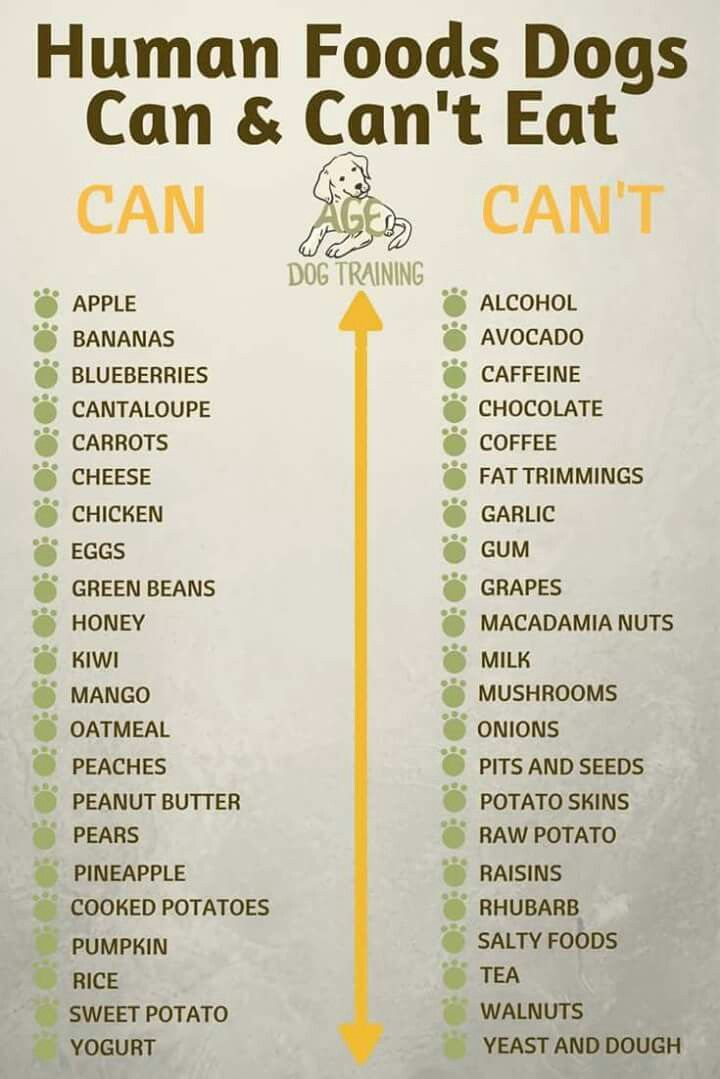 What Should Dogs Not Eat List