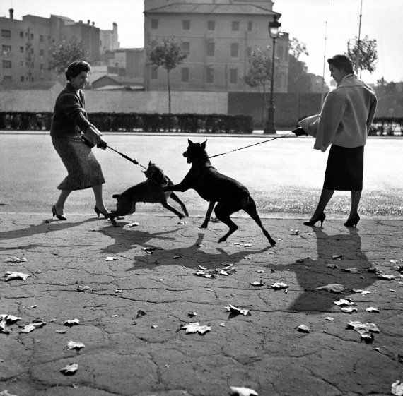 Català-Roca, Francesc: Paseando perros por la Diagonal