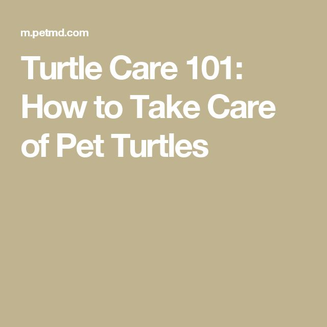 how to take care of a pregnant turtle
