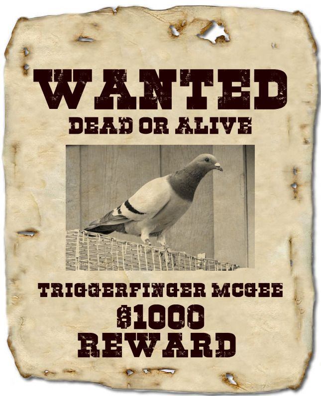 Wanted Poster Creator - Make a wanted poster Pigeons \ Doves - create a wanted poster free