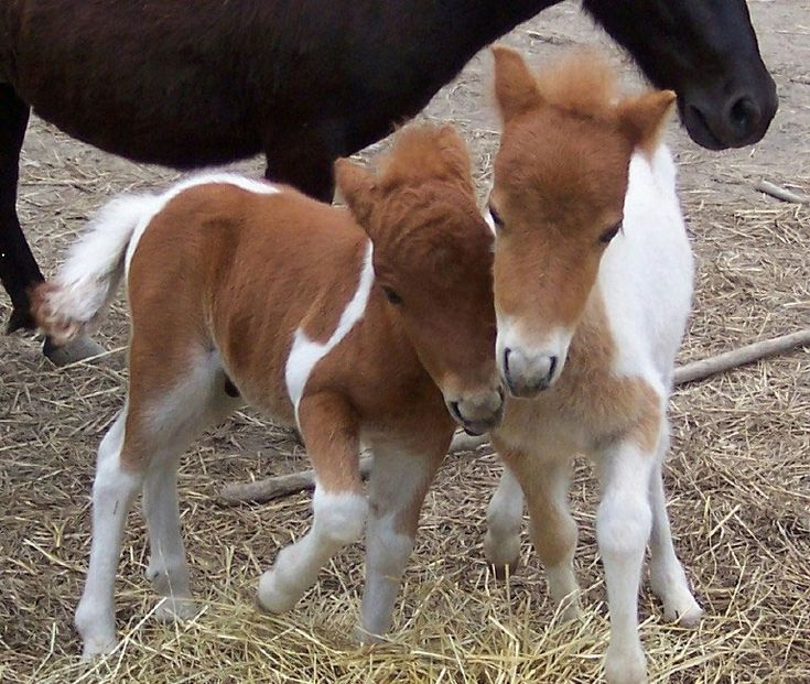 cute baby foals - photo #17