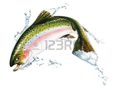 Fish jumping out of the water with some splashes Photorealistic airbrush illustration on white backg Stock Illustration