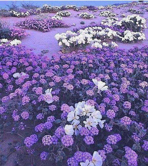 purple-white❤