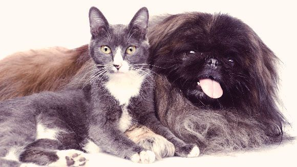 WHAT IS CEREBELLAR ATAXIA IN DOGS AND CATS?