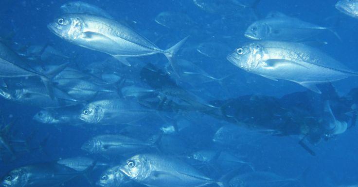 Formas baratas de resfriar um aquário de água salgada. Um aquário quente demais significa um desastre certo para os peixes e corais. Água aquecida perde oxigênio, fazendo os seres vivos sufocarem. A solução melhor e mais óbvia é comprar um resfriador para seu aquário. No entanto, resfriadores são caros para comprar e manter, então, se seu tanque estiver apenas poucos graus acima da temperatura ótima, ...