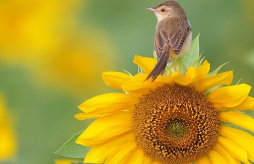 Bird on flower wallpapers