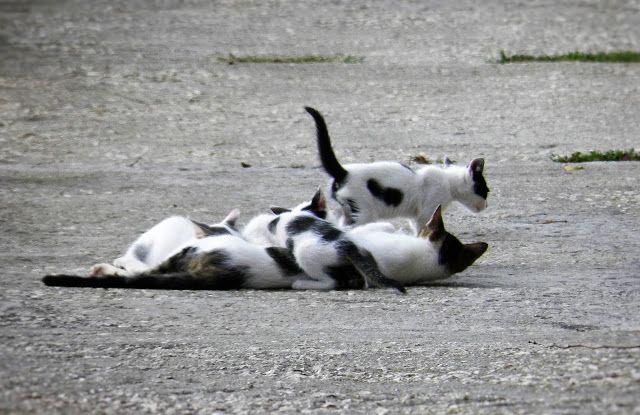 M  o   m   e   n   t   s   b   o   o   k   .   c   o   m: Στη μέση του δρόμου η μαμά γάτα θηλάζει τα γατάκια...
