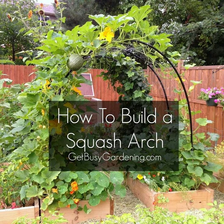 Build a squash support arch for your garden... and of course, find kids and pets under it all summer long...