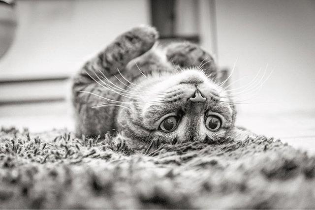 A hét első napját mindenki el tudná képzelni így: egy meleg szobában a pihe-puha szőnyegen fekve 😜🙀😻😺 #drpadlo #pihepuha #szőnyeg #cat #kitty #macska #újszőnyeg #hétfő #mondaymood | SnapWidget