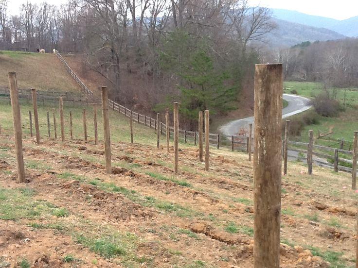 Grapevine Vinyard Building And Process Grape Vine