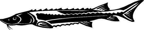 Sturgeon Fish Die-Cut Decal Car Window Wall Bumper Phone Laptop